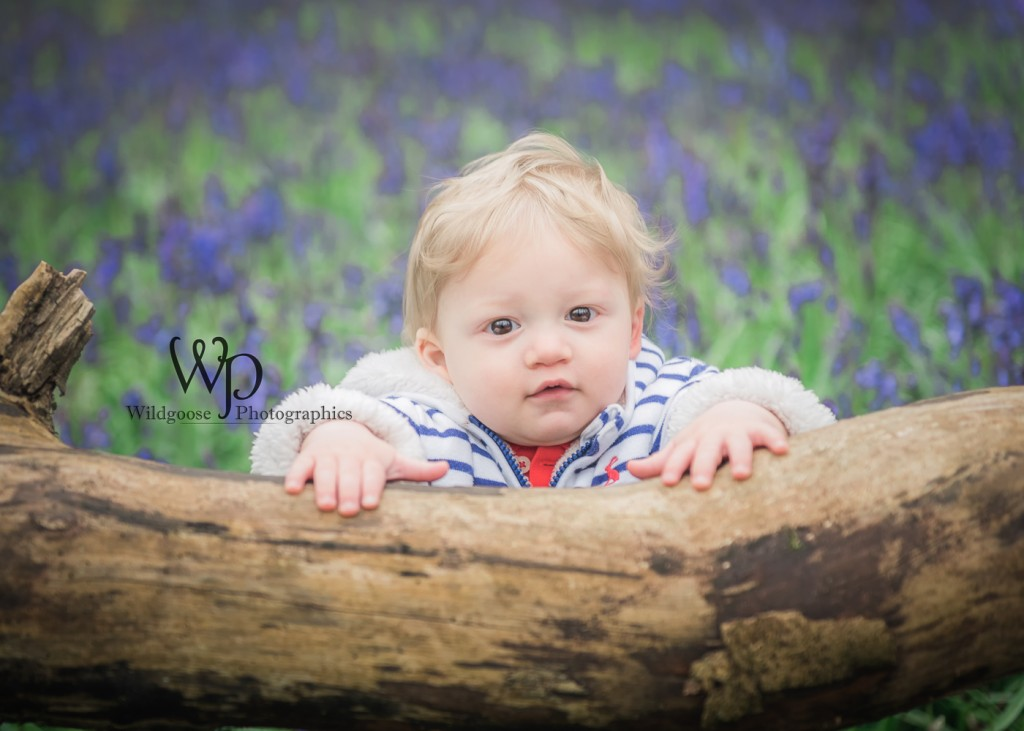 Bluebell photo session Northampton