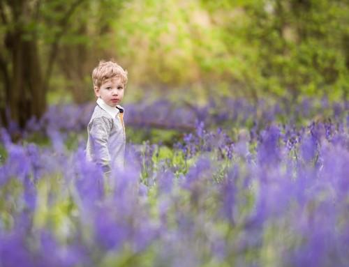 Bluebells In Northampton