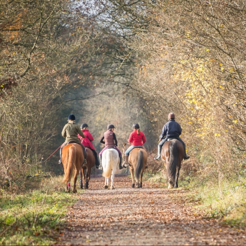 Buckingham Equine Photographer