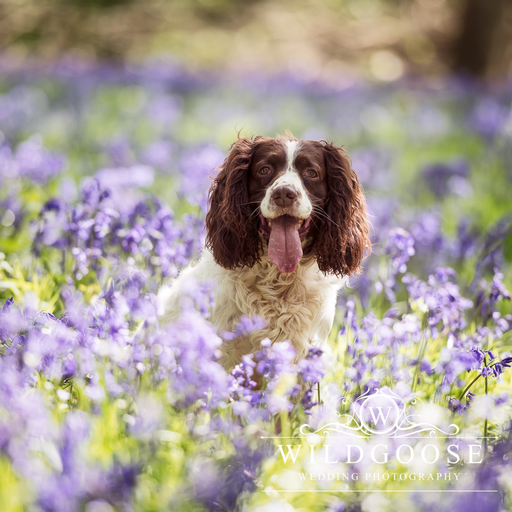 Buckingham Pet Photographer