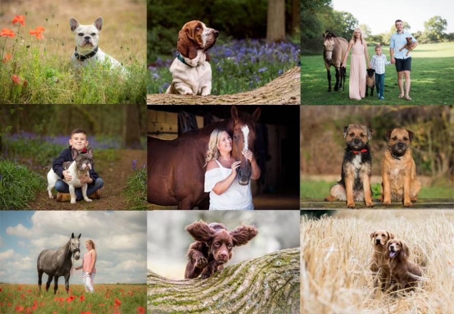 Pet & equine photography in Northampton and Buckingham
